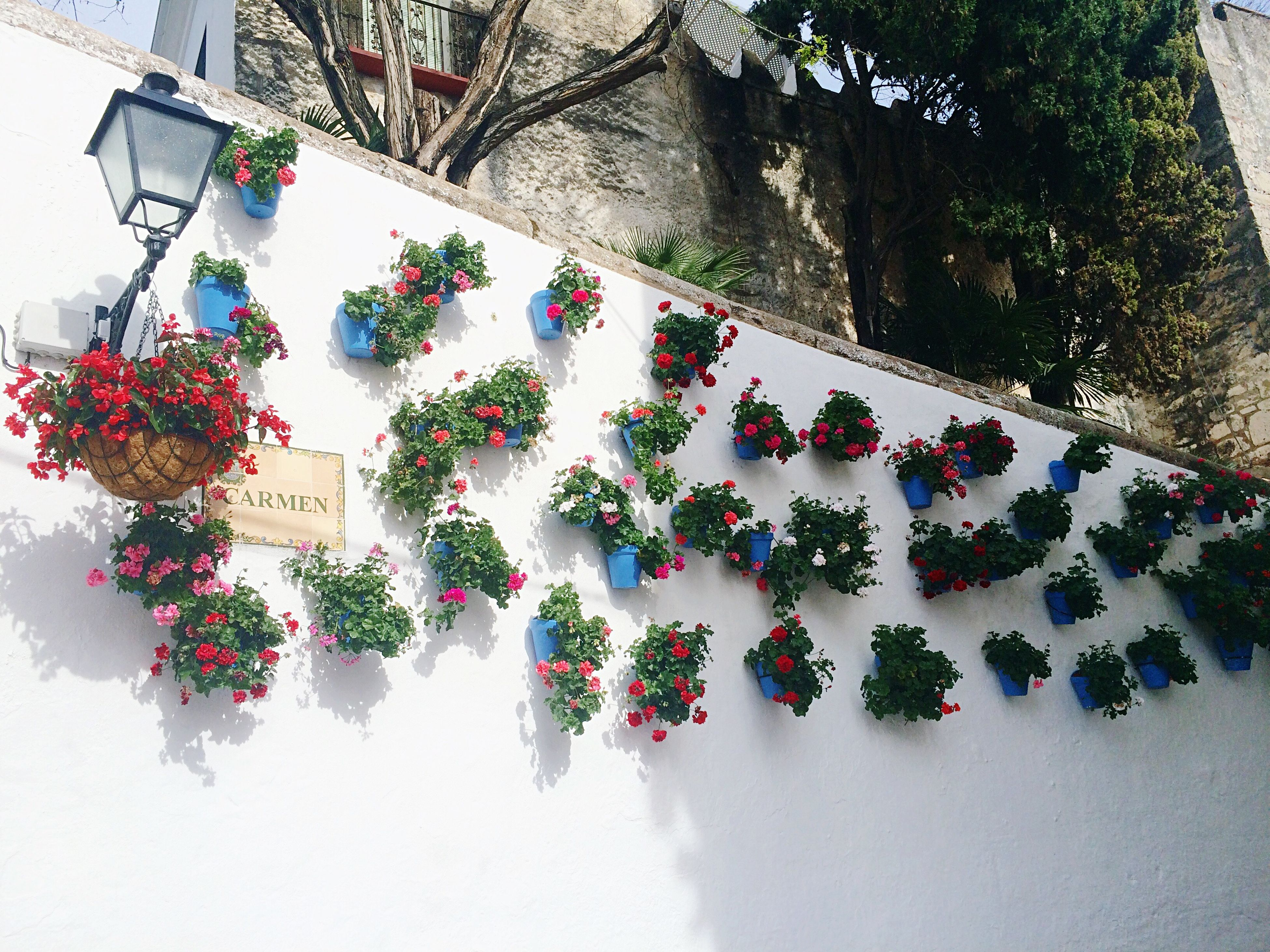 low angle view, decoration, architecture, built structure, wall - building feature, flower, art and craft, hanging, multi colored, creativity, indoors, design, floral pattern, art, building exterior, no people, growth, tree, pattern, wall
