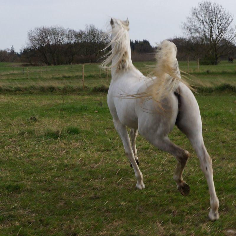 Horses Horse My Horse I Love Horses