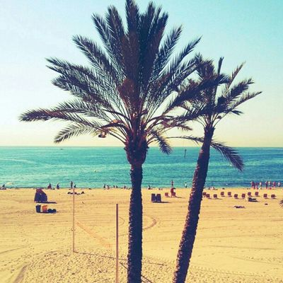 in the morning you are happy to have beach and palms of #Barcelona at Villi Olimpic. You may chill out, swim, surf and play =)) Barcelona