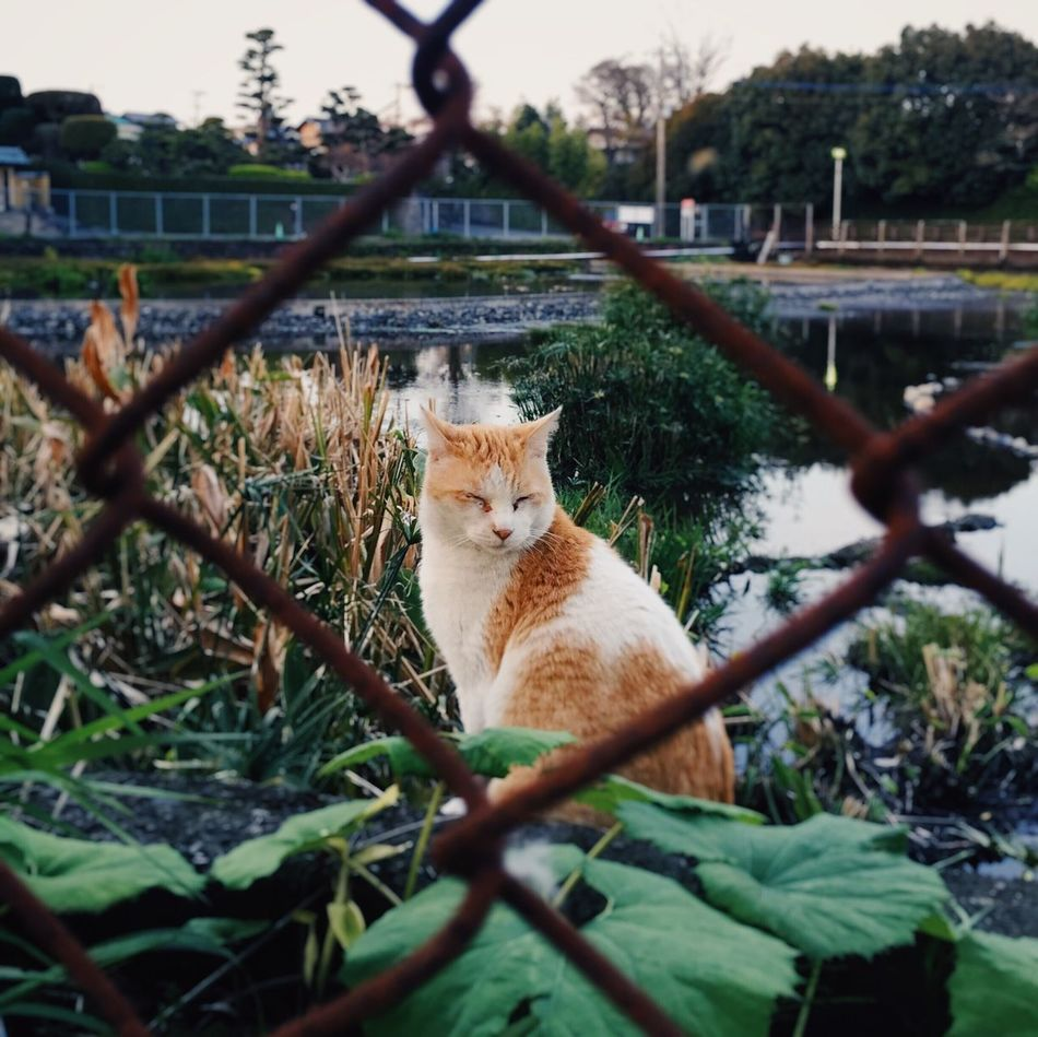 Cat Domestic Cat One Animal Wild Cat Animal Themes Day Outdoors Nature VSCO Eyem Best Shots Mobilephotography
