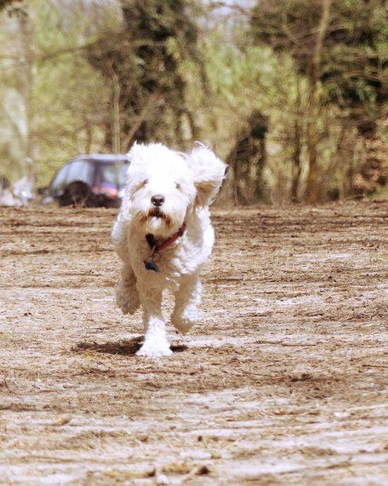 Dog Walking Photooftheday