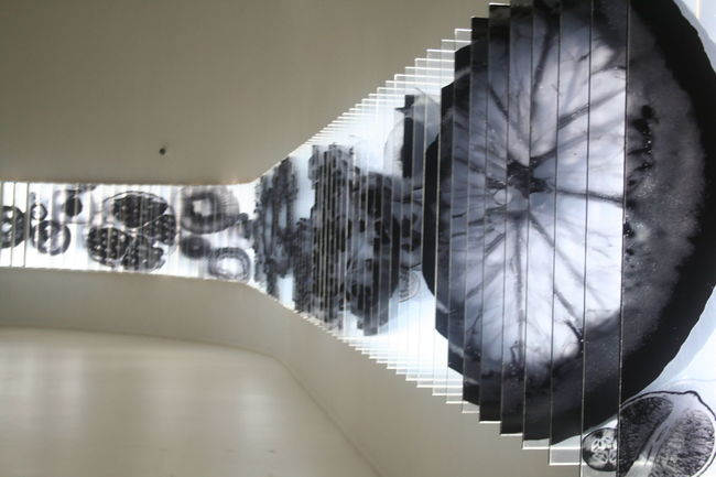 2015  Art Coreanfood Expo Food Milano Wall
