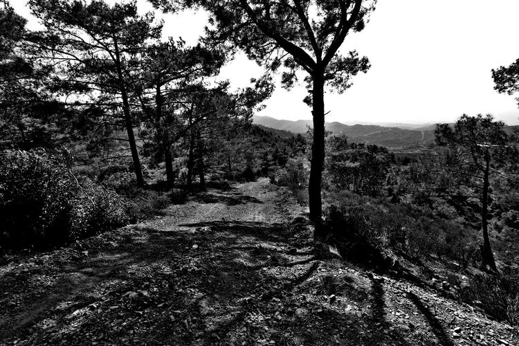 Tree Nature Beauty In Nature Tranquility No People Tranquil Scene Outdoors Branch Blackandwhite
