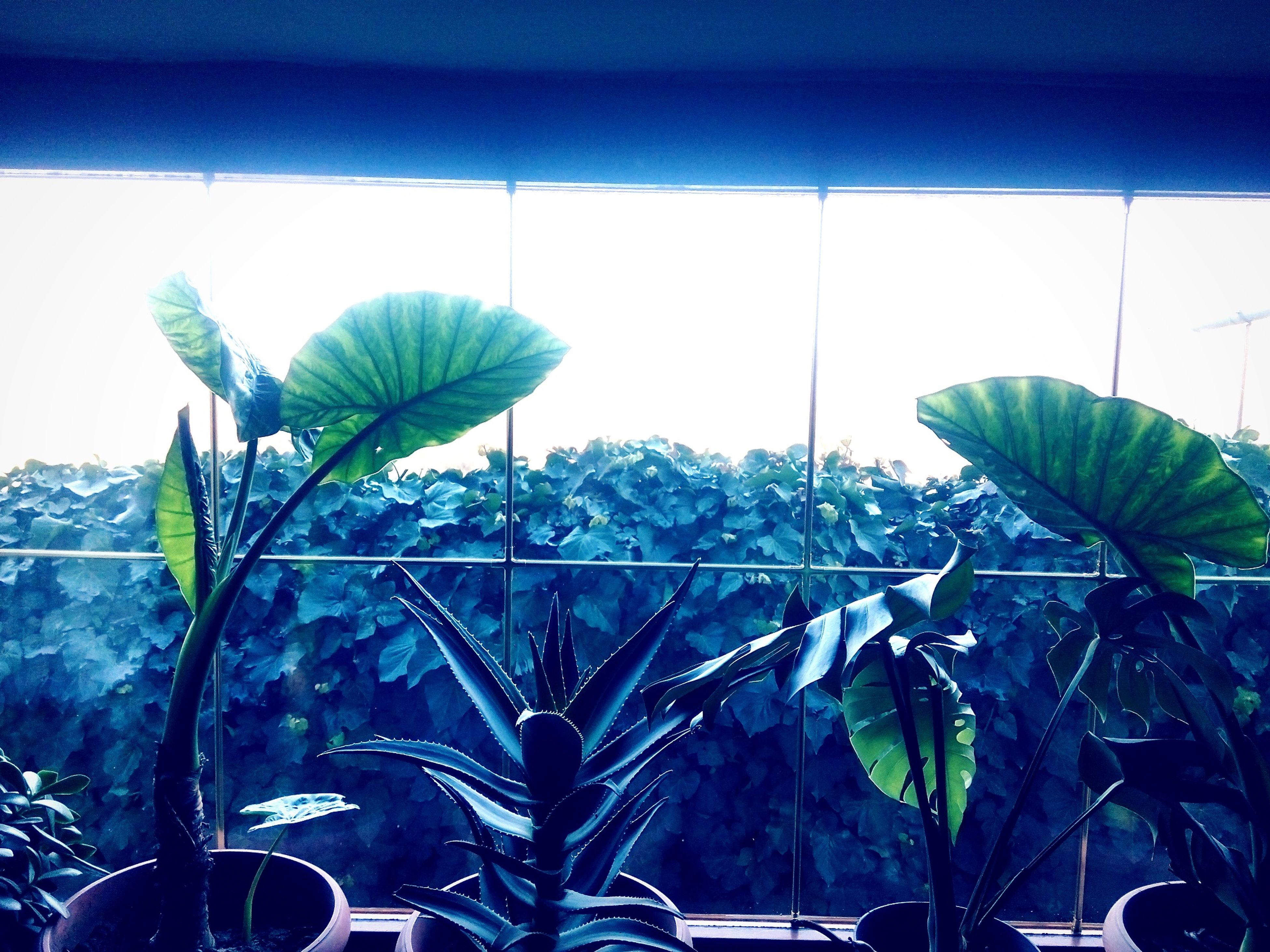 plant, indoors, leaf, potted plant, window, growth, sunlight, green color, nature, day, no people, close-up, glass - material, sky, wall - building feature, land vehicle, built structure, transparent, architecture