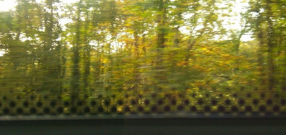 Tree Reflection Green Color Train Track Amateurphotography Smartphone Photography No People No Filter, No Edit, Just Photography Transportation Nature Autumn Colors Out The Train Window Motion Blur Day Hastings To Charing Cross,mooving,transport,travel,window sticker.dots ,