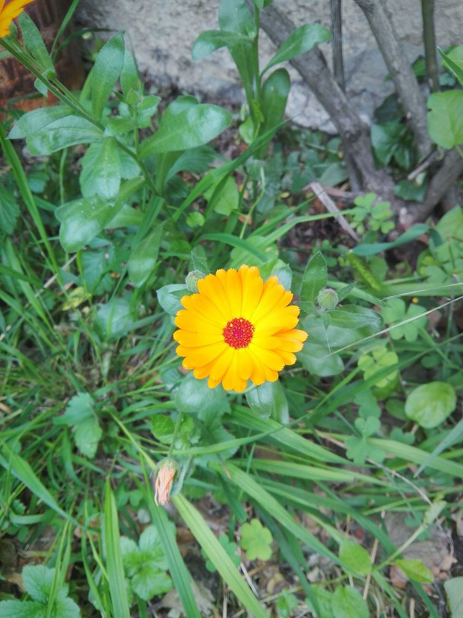 Fiore Orange Flower Orange Beauty In Nature