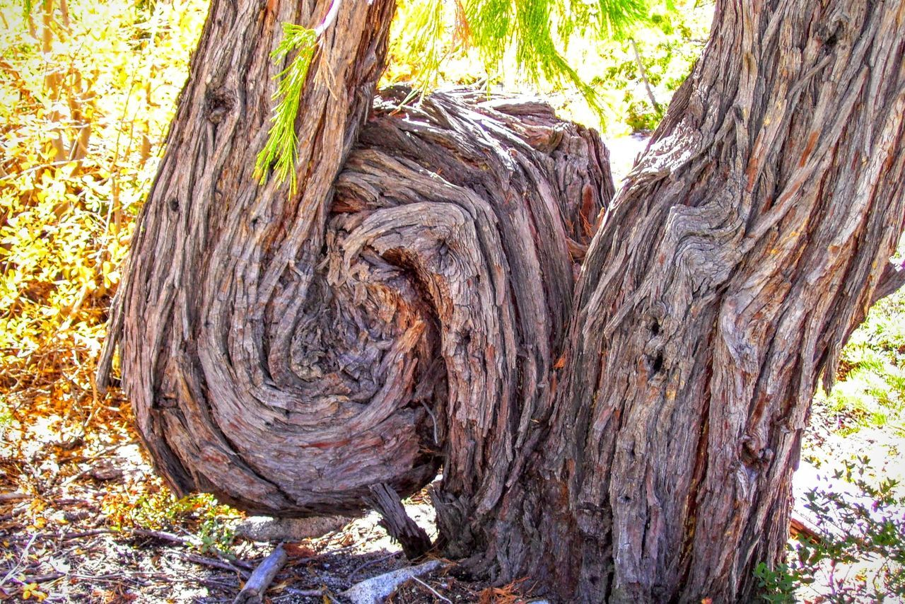 tree trunk, tree, nature, day, textured, no people, outdoors, rough, woodland, bark, forest, wood - material, growth, close-up