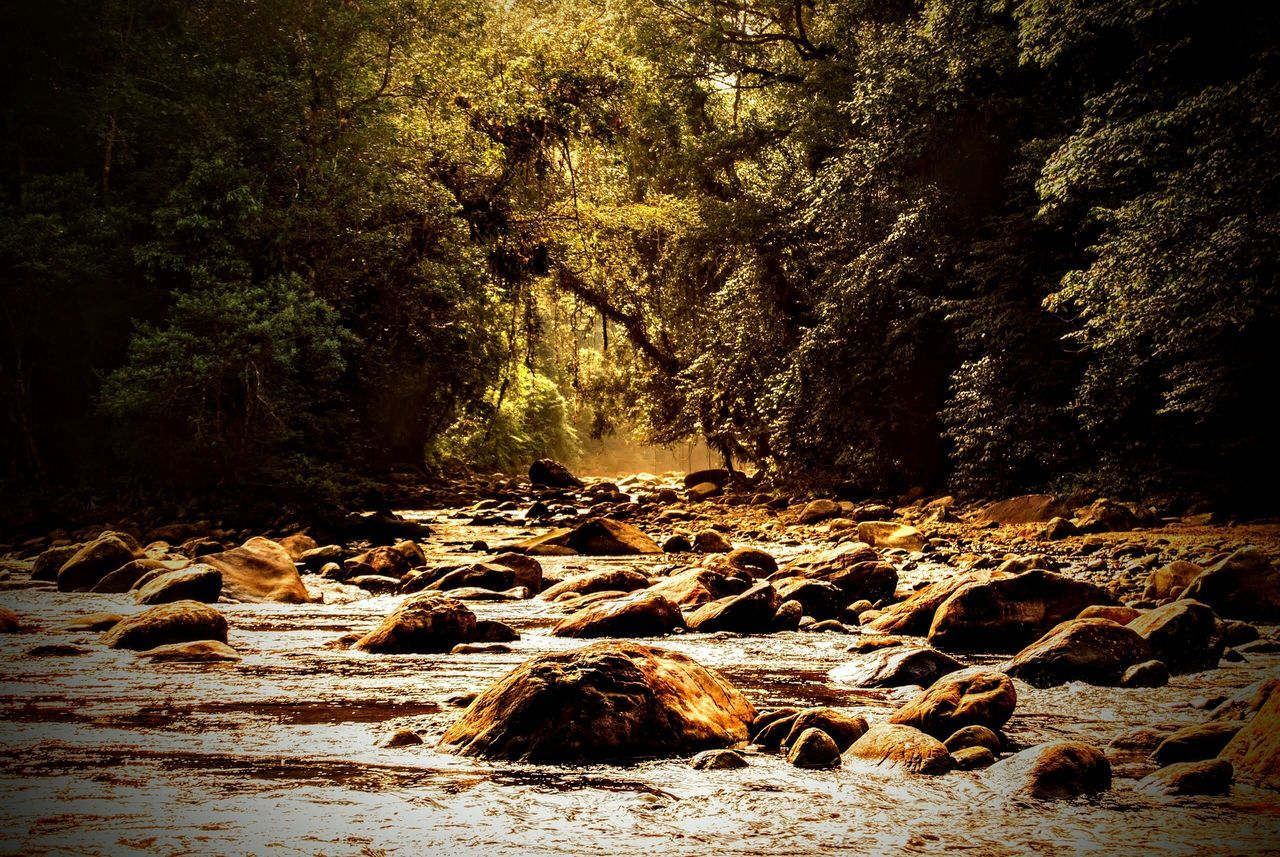 Rio Branco Intanhanhem Sao Paulo - Brazil Saopaulo São Paulo Brazil Brasil Brasil ♥ São Paulo, Brasil Nature Rio Nature No People Water Tree Outdoors Beauty In Nature Sunlight Tranquility Day Sand Beach Forest Scenics Sky The Week On EyeEm