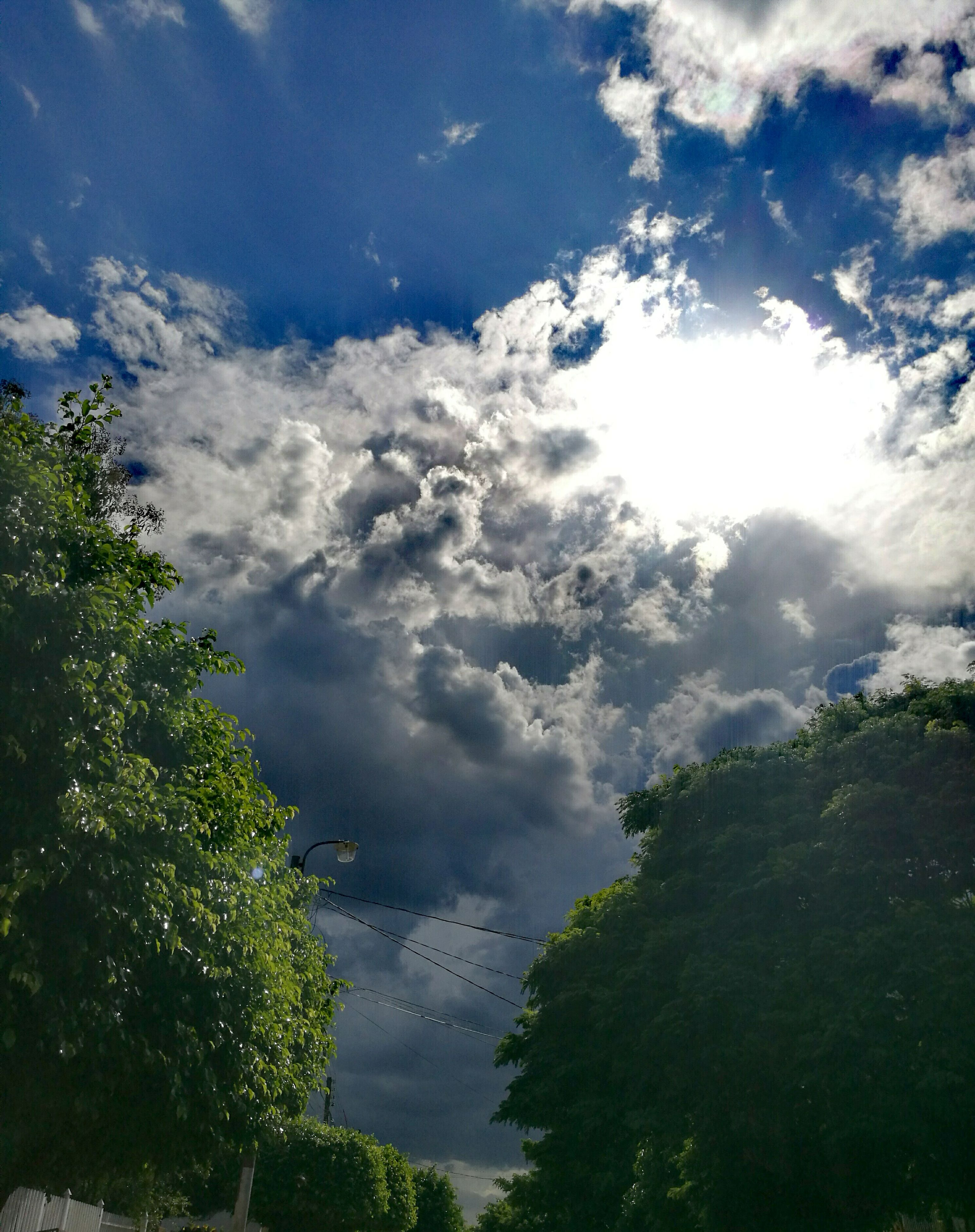 tree, sky, nature, cloud - sky, beauty in nature, no people, outdoors, day, treetop