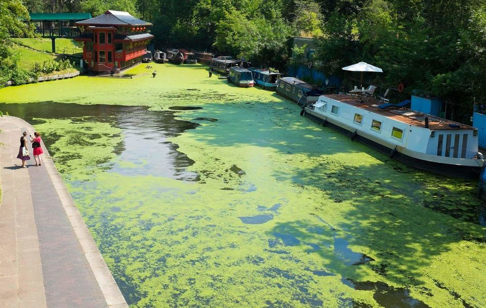 Algae Covered Lake Water Tree Built Structure Green Color Architecture Outdoors Yellow Real People Day Nature FujiX100S London Fuji Fujifilm Algae Lake Park Regents Park Summer Beauty In Nature Beautiful Chinese Boats Calming Building Exterior