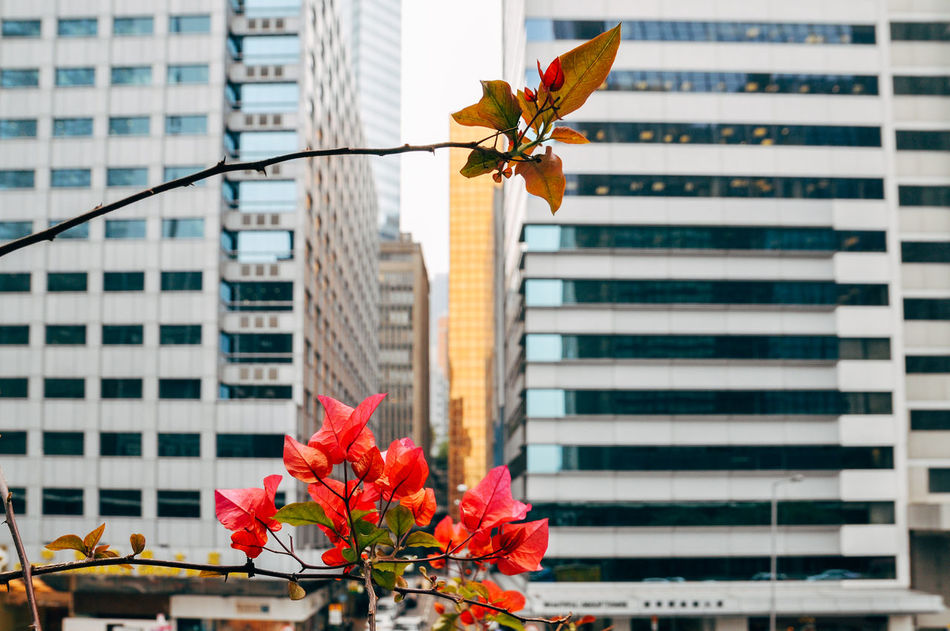 Beautiful stock photos of hong kong, Architecture, Branch, Building, Building Exterior