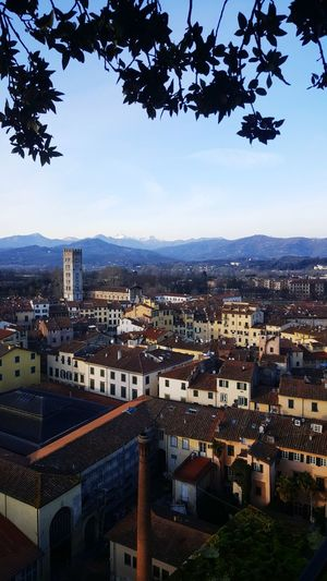 over the top! Lucca Lucca Italy Torre Guinigi Tuscany Tuscany Italy Medieval Architecture MedievalTown Medieval City Cityscape City High Angle View Urban Skyline Travel Destinations Building Exterior Outdoors Architecture Aerial View Day Mountain Vacations Landscape Sky Residential Building No People