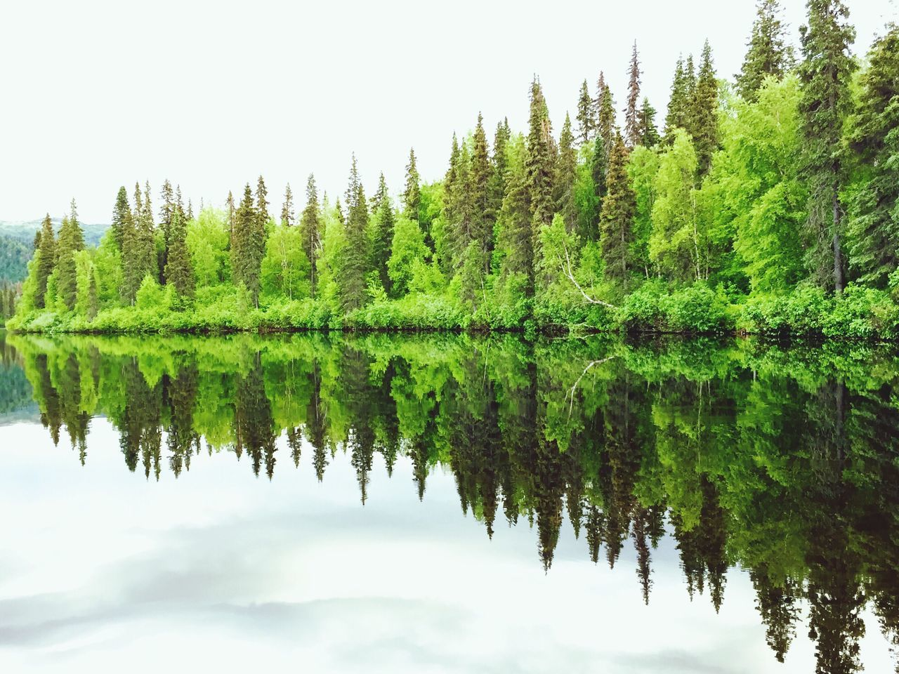 Reflection Of Trees In Calm Lake Against The Sky
