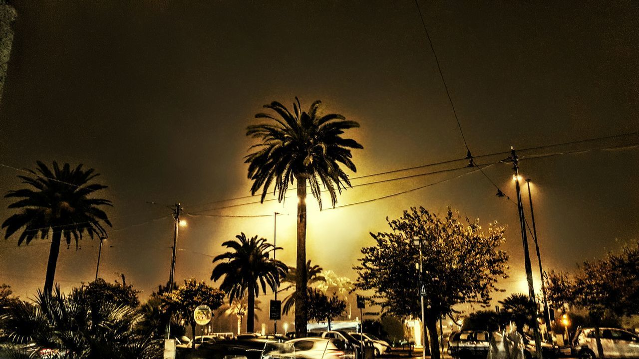 Palm Tree Illuminated Night No People Sky Holydays Travel Destinations Reflection Cagliari Capitale Europea Della Cultura Sardegna😍😍👍👌 Hello World ✌ Italy❤️ Relaxing Friends ❤ Day Instgram Facebook Page Hello World Nightphotography Saturdaynight Nebbia Street Light Old Town Tourism Travel