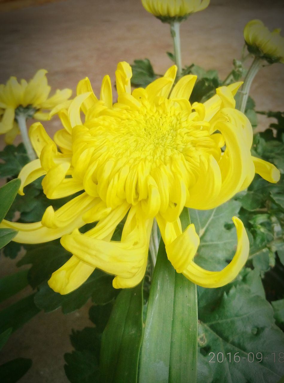 flower, yellow, fragility, petal, beauty in nature, freshness, nature, growth, plant, flower head, close-up, no people, outdoors, blooming, day, springtime
