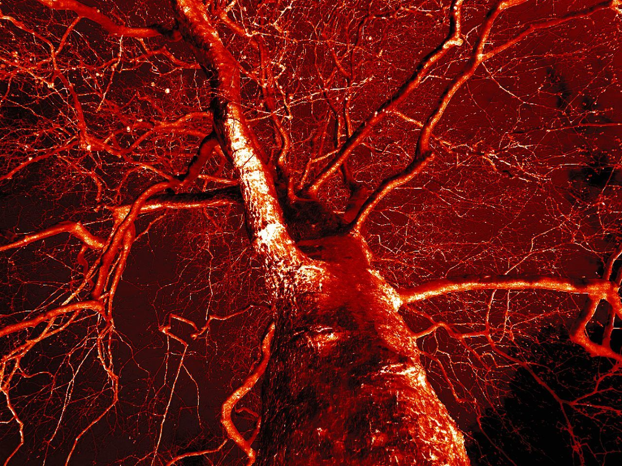red, outdoors, no people, night, full frame, illuminated, nature, close-up, lava