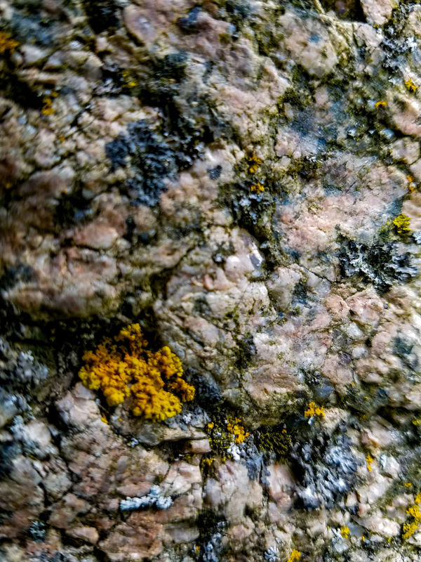 Full Frame Nature Close-up Abstract Beauty In Nature No People Pattern Rock Patten Pink Background Backgrounds Textured  Day Outdoors Rock Rock Background Rock Texture Rough Rough Texture Rigid Blue Moss Macro Macro Photography