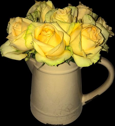 Black Background Yellow Studio Shot Flower Freshness Close-up No People Nature In Home Yellow Flower Yellow Color Beautiful Nature Photography Roses🌹 Rose - Flower Berlin