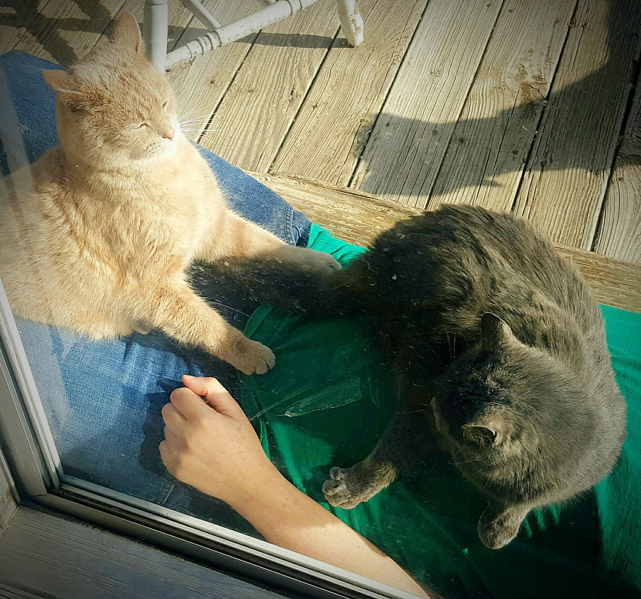-Jackie & Jazzman- Cats 🐱 My Cats Cat♡ Through The Window Fighting Bitchplease Cool Cats  Mortal Enemies? Capturing The Moment Life In Motion Samsung Galaxy S6 Edge Cellphone Photography Sunbathing ❤ My Son!! Homesweethome On The Porch Front Or Back Yard