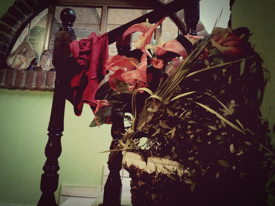 Casa House Flores Flowers