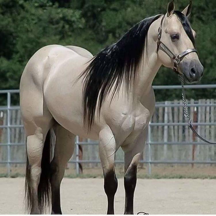 Horse Animal Themes Animal Nature One Animal Domestic Animals Outdoors