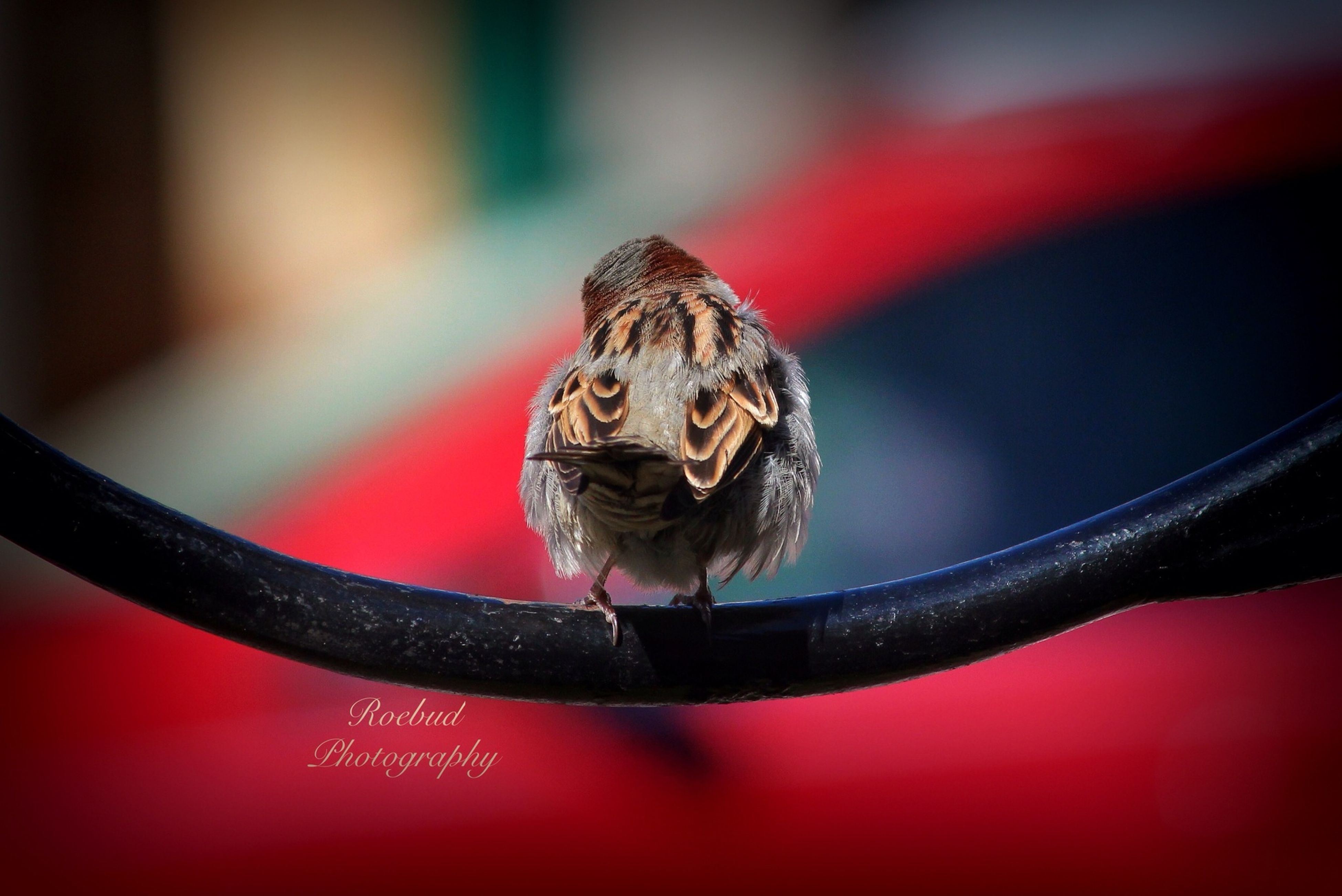 one animal, animal themes, close-up, wildlife, animals in the wild, focus on foreground, indoors, animal eye, selective focus, red, animal head, portrait, no people, zoology, insect, animal body part, animal, day, looking at camera, nature