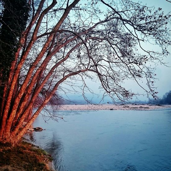 Fiume Piave Landscape Nature. Trees The Great Outdoors - 2016 EyeEm Awards