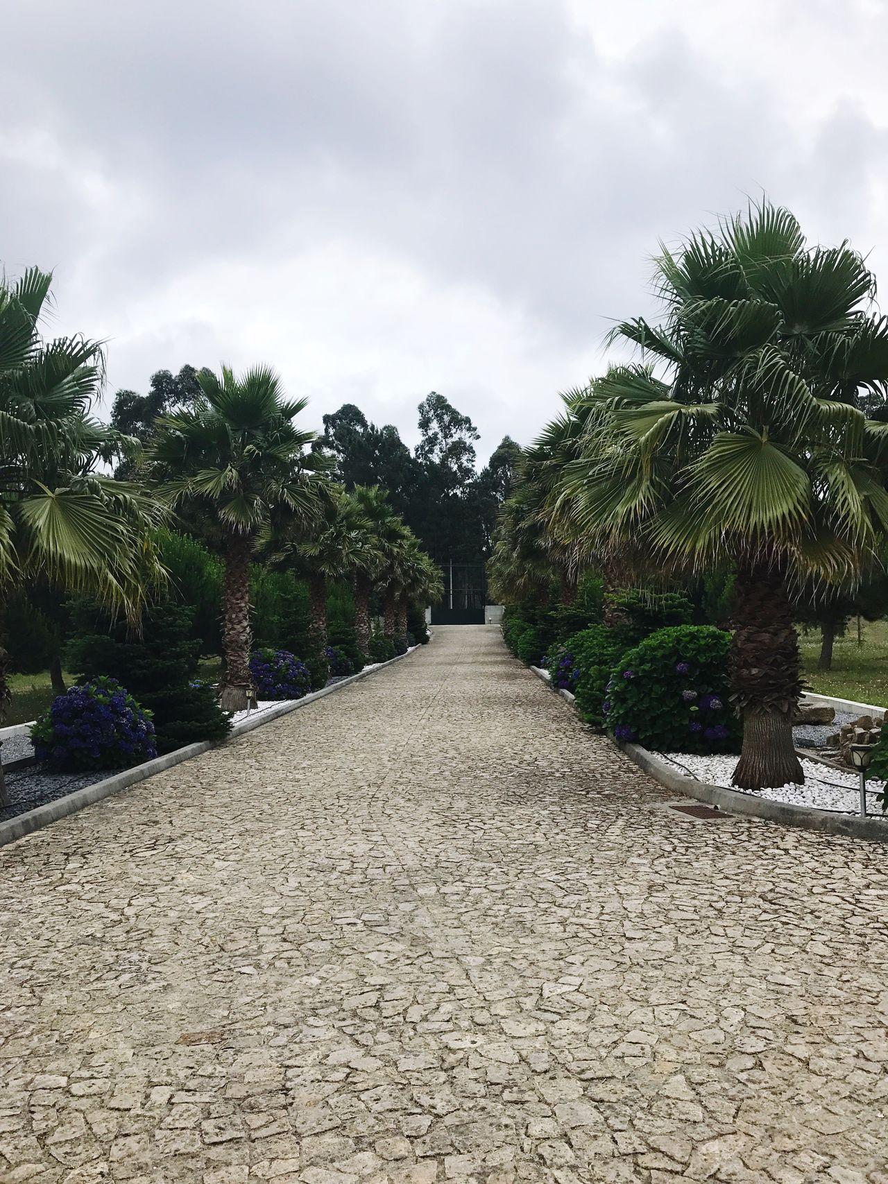 Luxury Driveway Palm Tree Hydrangeas
