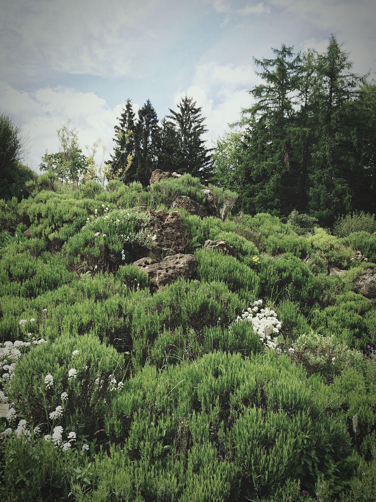 Landscape Nature Forest Trees