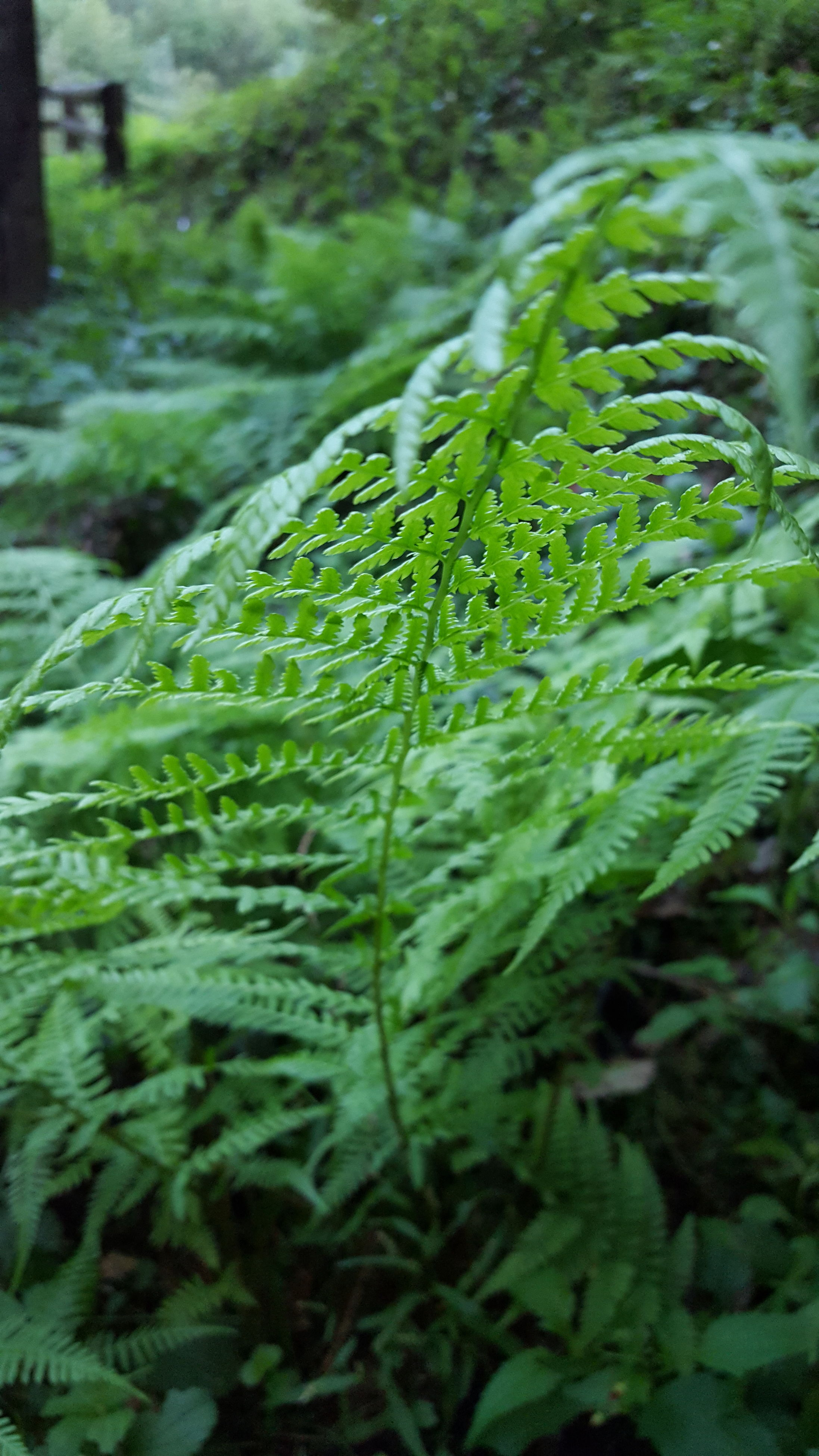 green color, growth, close-up, plant, nature, beauty in nature, water, fern, freshness, focus on foreground, scenics, selective focus, day, fragility, lush foliage, outdoors, botany, green, tranquility, non-urban scene, frond, purity