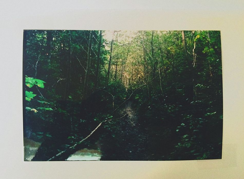 Forest Green Photo Book