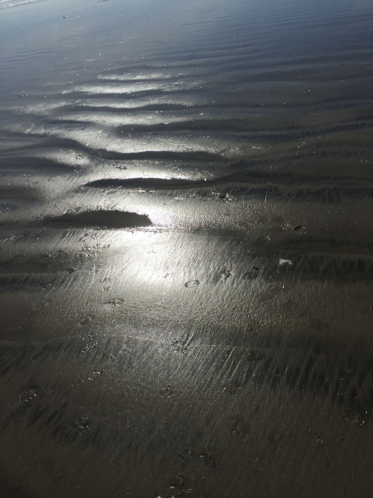 Cold Day At The Beach Day At The Beach Nature Sand Patterns Sea And Sky Sea Shore Seaside Beach Sea Shore Birds