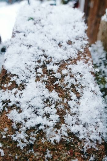 Cold Temperature Winter Close-up High Angle View Day No People Snow Nature Outdoors Paw Print Brick Snow Flakes Snowing Wintertime Winter White Snowflake