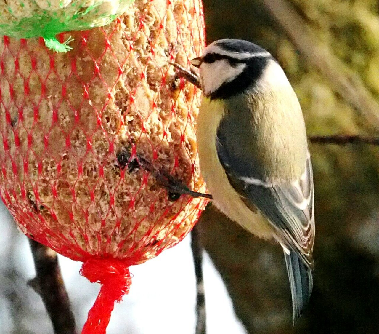 Bird Animal Themes Perching Animals In The Wild Animal Wildlife Nature One Animal Tree Outdoors Branch Close-up Food Beauty In Nature Birds Eating Bird Eating Bird Feeder The Power Of Nature Winter Nature Outside Nature Animals In The Wild Beauty In Nature