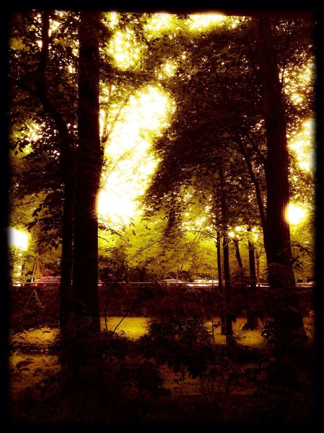 I see a Golden Forest in Park Ridge EyeEm Nature Lover Hanging Out Nature