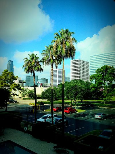 Beautiful day in beautiful Houston First Eyeem Photo