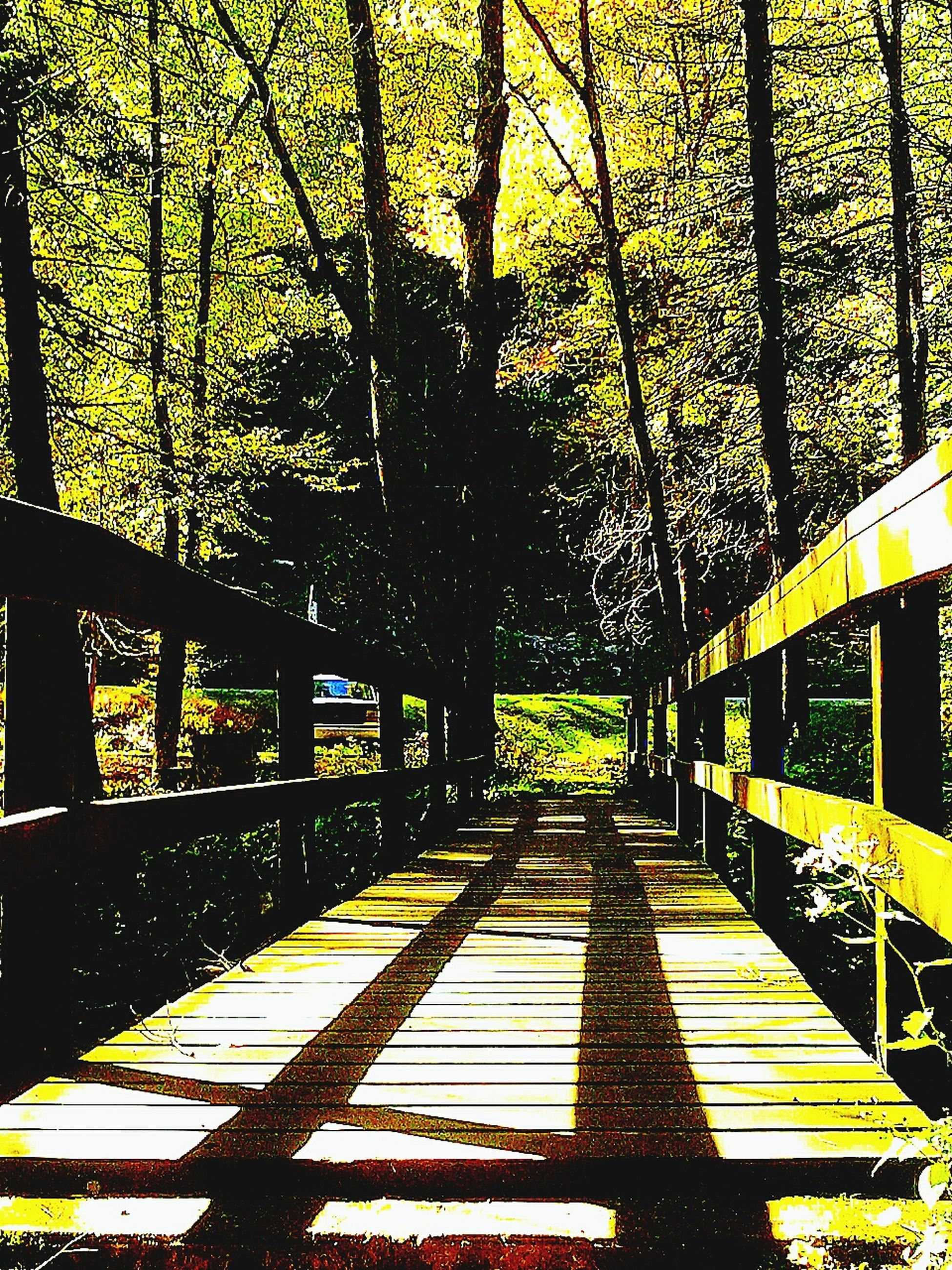 tree, the way forward, railing, footbridge, bridge - man made structure, tree trunk, branch, growth, built structure, shadow, park - man made space, sunlight, connection, nature, forest, tranquility, architecture, outdoors, day, footpath