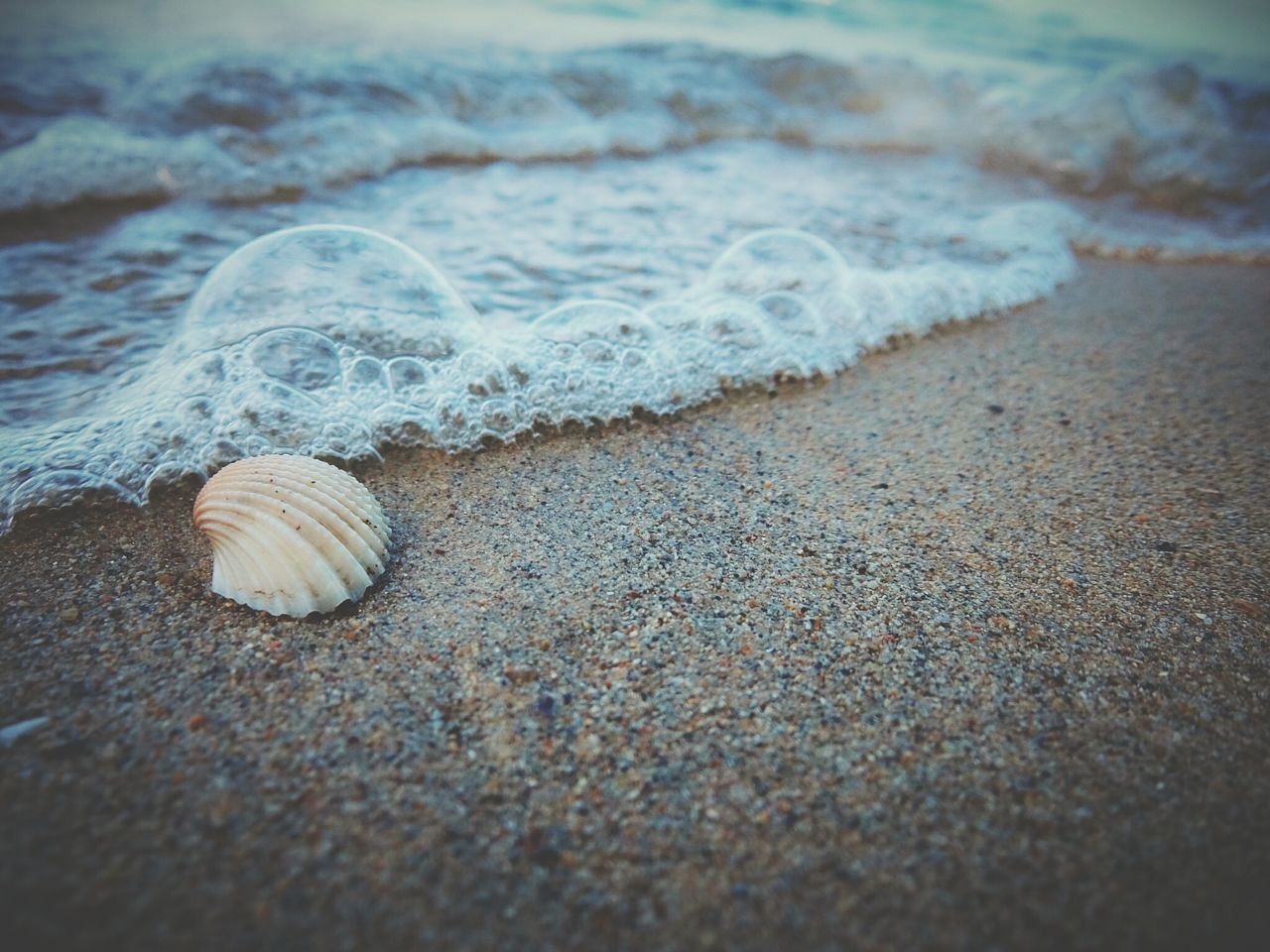 She sells seashell by the seashore Sea Beach Sand Water Nature No People Waves Bubbles Froth Seashell Seashore