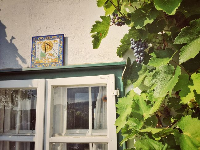 Agriculture Agriturismo Building Europe Farm Farmhouse Germany Glass - Material Grape Growth Harvest Holidays House Leaf Old Plant Red Wine Renovation Residential Building Sundial Vine Wall Window Wine Winery
