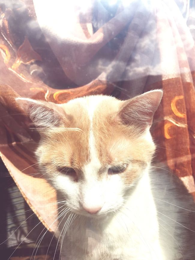 Cat Relaxing Sad Inside Glass Window Lago Maggiore, Italy Ginger Cat Red Nice IPhoneography
