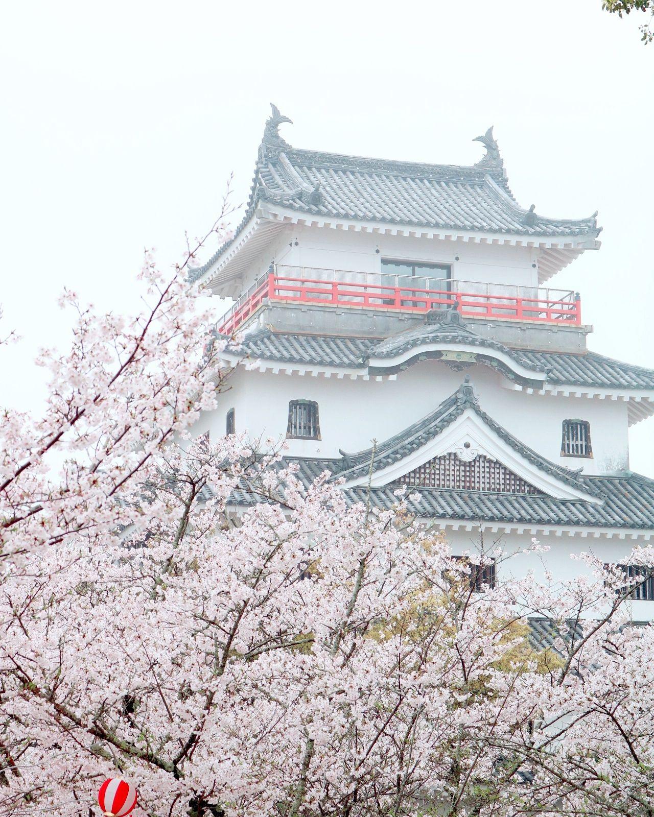 唐津城 唐津 桜 Cherry Blossoms