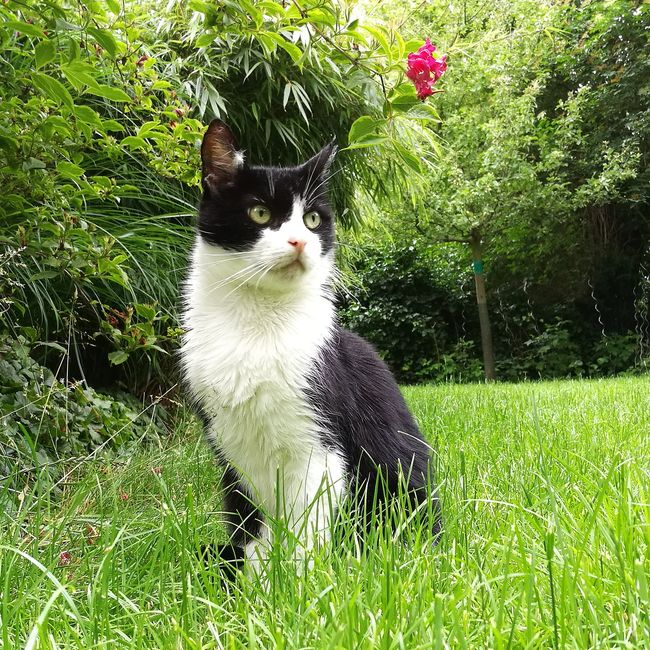 I Love My Cat Eyem Cats Garden Photography Cat Lovers Tomcat Animal Green Grass Nature On Your Doorstep Black And White Outdoors Pet Photography  Pet