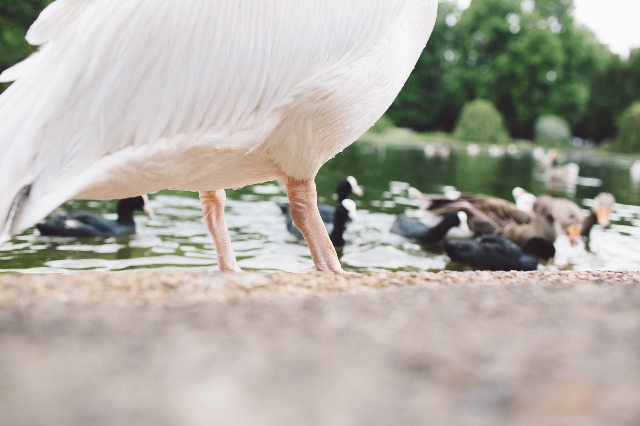 animal themes, one animal, animals in the wild, animal wildlife, bird, day, selective focus, outdoors, nature, domestic animals, mammal, no people, close-up, water, beauty in nature, crane - bird, perching