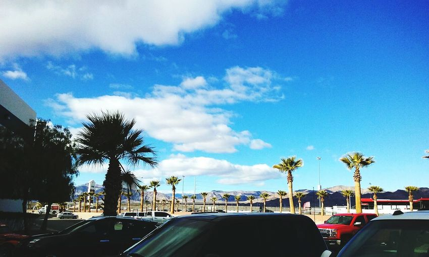 Las Vegas racetrack, telling a story differently, palm trees, cars Check This Out Outdoors Photograpghy ,Cars, Blue Sky, Clouds