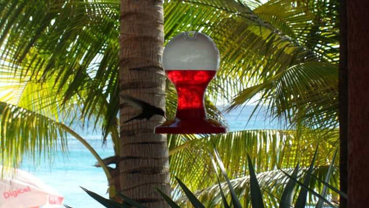 Tree Nature No People Sky Beauty In Nature Outdoors Happiness Gloria2017 Hummingbird Honduras roatan
