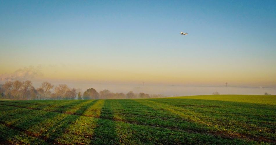 Field Agriculture Rural Scene Landscape Nature Farm Beauty In Nature Scenics Tranquility Tranquil Scene Growth No People Clear Sky Outdoors Sky Green Color Day Aeroplane Aviation Travel Finding New Frontiers Softness Beauty In Nature EyeEm Nature Lover Lifestyles