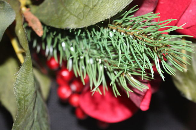 Christmastime Close-up Focus On Foreground Green And Red Leaves Red Selective Focus