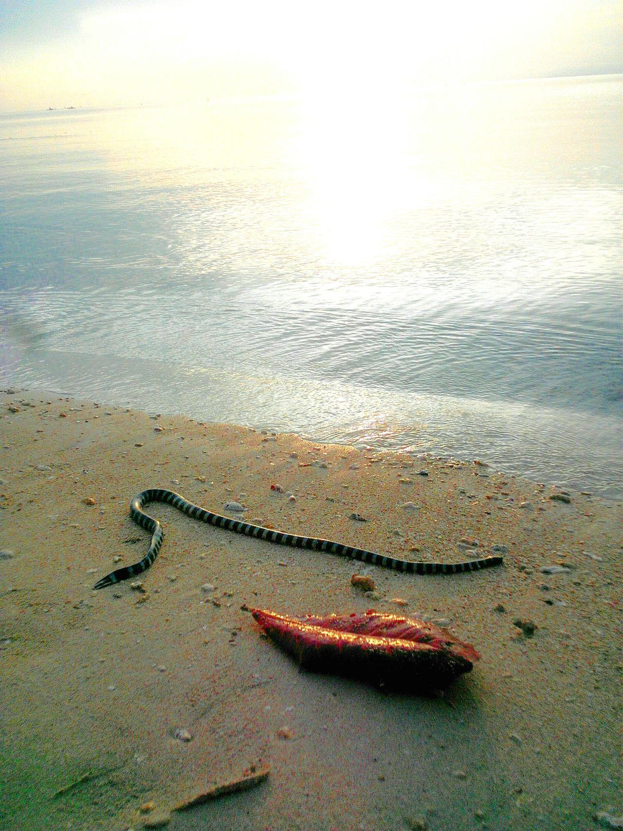 Even snakes relax at beach.. 😇😇😇 Relaxing Beach Seasnakes Enjoying Life