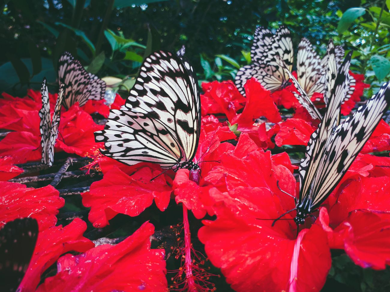 Butterfly Feasting on Nectar. Flower Nature Plant Close-up Butterfly - Insect Butterfly Red Insect First Eyeem Photo