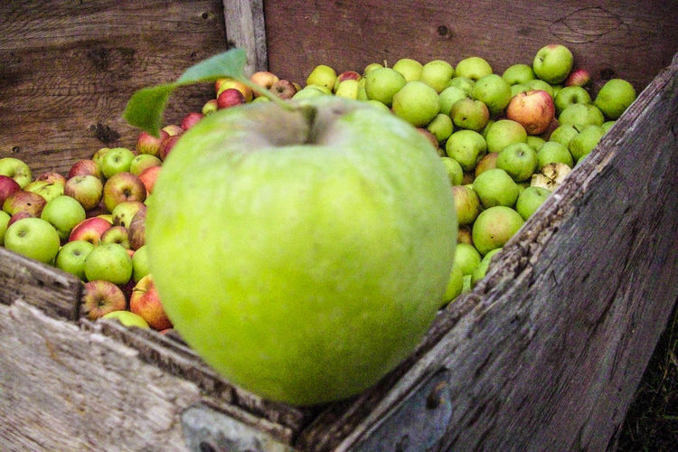 Apple - Fruit Applefarm Box Day Food Freshness Healthy Eating Nature No People Work